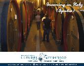 Visite guidate nelle cantine vinicole in zona Castel del Monte e degustazione vini